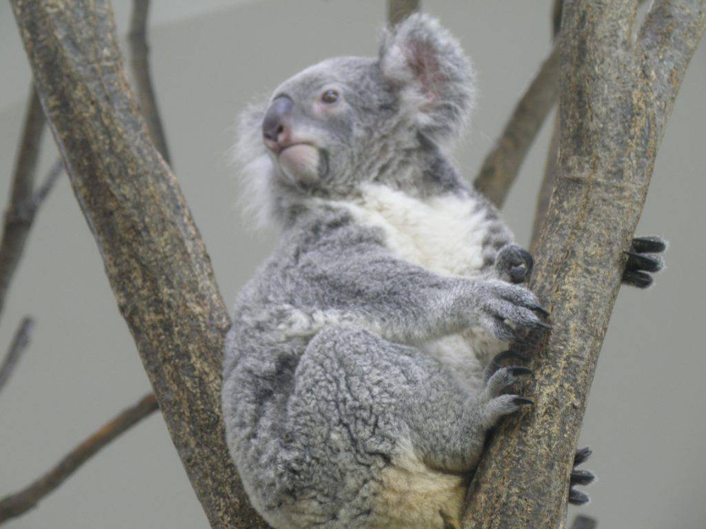 次のお休みはオーストラリアへ行こう!